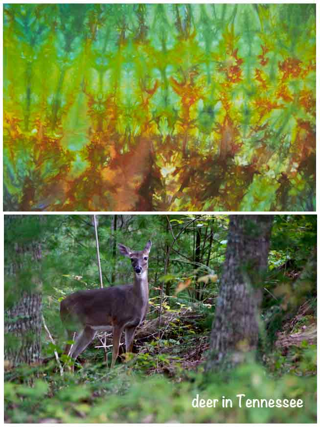 deer in Tennessee and in cloth