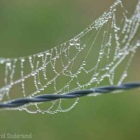 spider web jewels