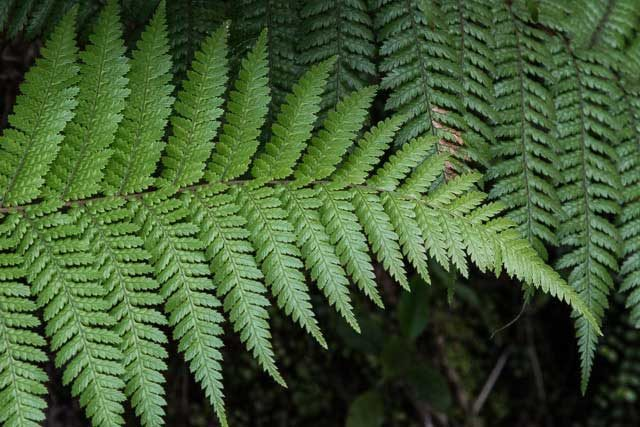 Ferns in New Zealand